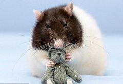 生肖鼠的人立冬出生命運解析,生肖鼠最適合和什么生肖結婚?